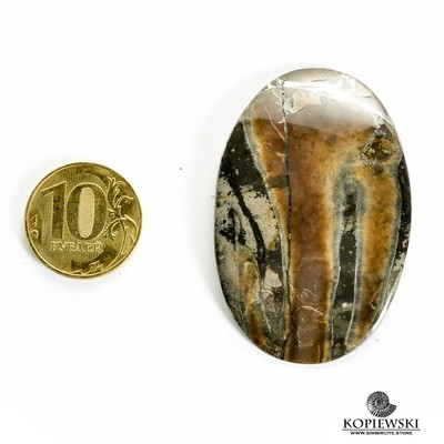 Аммонитовый симбирцит 55*35*3 мм