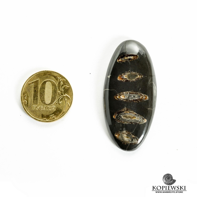 Аммонитовый симбирцит 45*20*3 мм