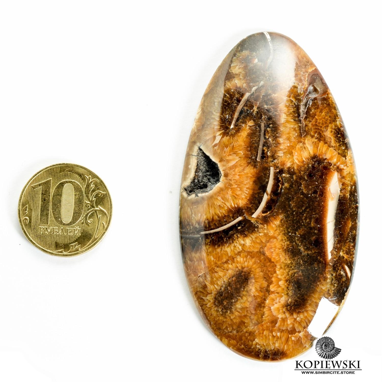 Аммонитовый симбирцит 75*40*3 мм