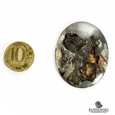 Аммонитовый симбирцит 48*40*3 мм