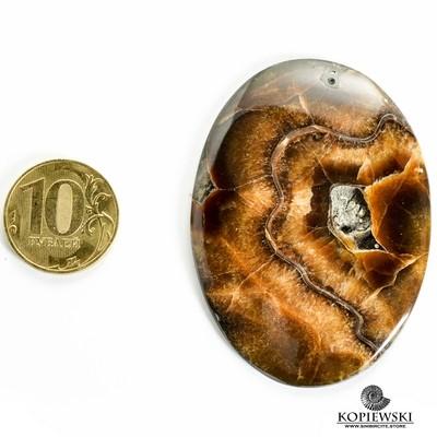 Аммонитовый симбирцит 60*45*3 мм