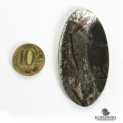 Аммонитовый симбирцит 60*35*3 мм