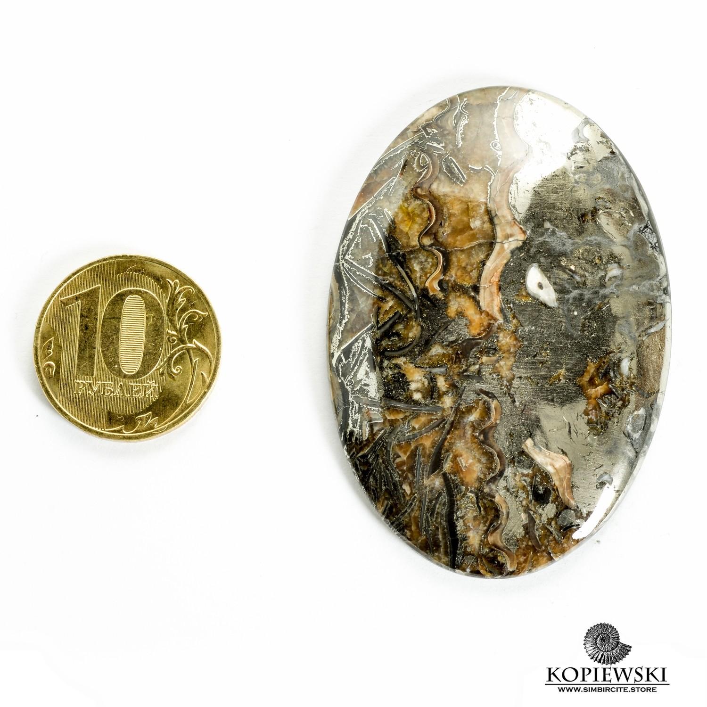 Аммонитовый симбирцит 60*40*3 мм