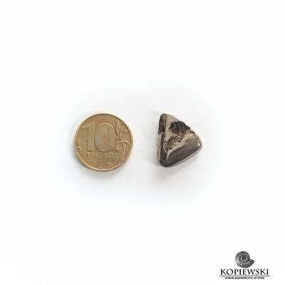 Ammonite Geode (Druzy)