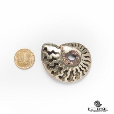 Pyrite Ammonite