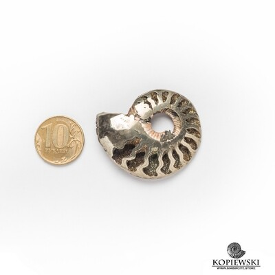 Pyrite Ammonite