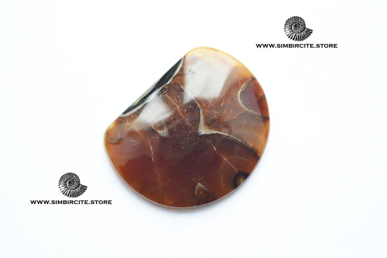 Аммонитовый симбирцит 40*32*4 мм