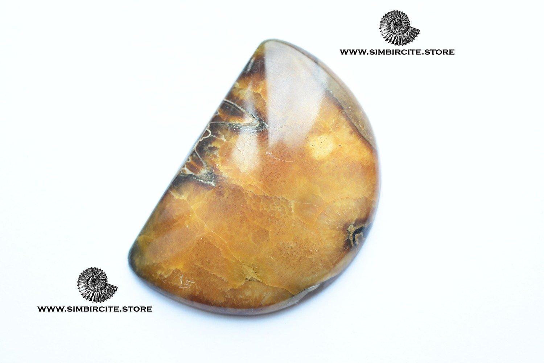 Аммонитовый симбирцит 50*35*6 мм