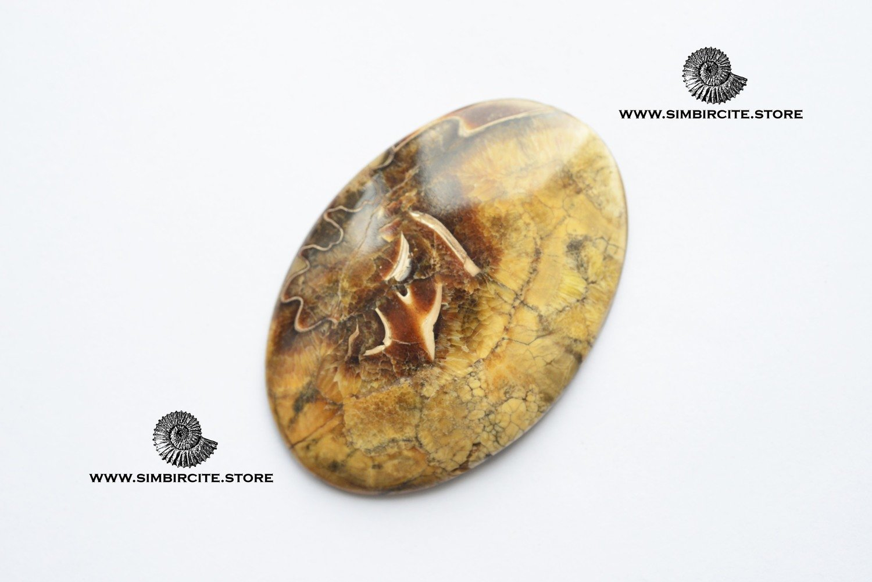 Аммонитовый симбирцит 60*40*4 мм