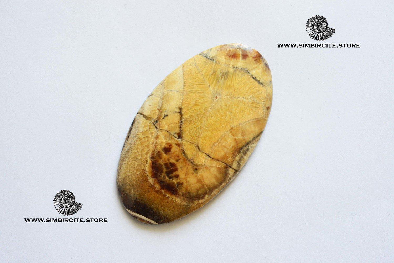 Аммонитовый симбирцит 63*35*3 мм