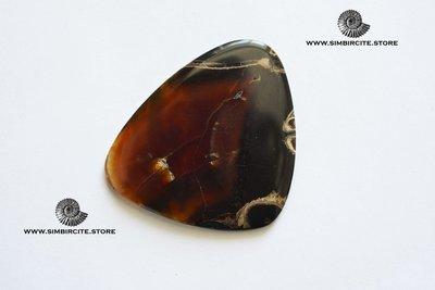 Аммонитовый симбирцит 50*39*5 мм