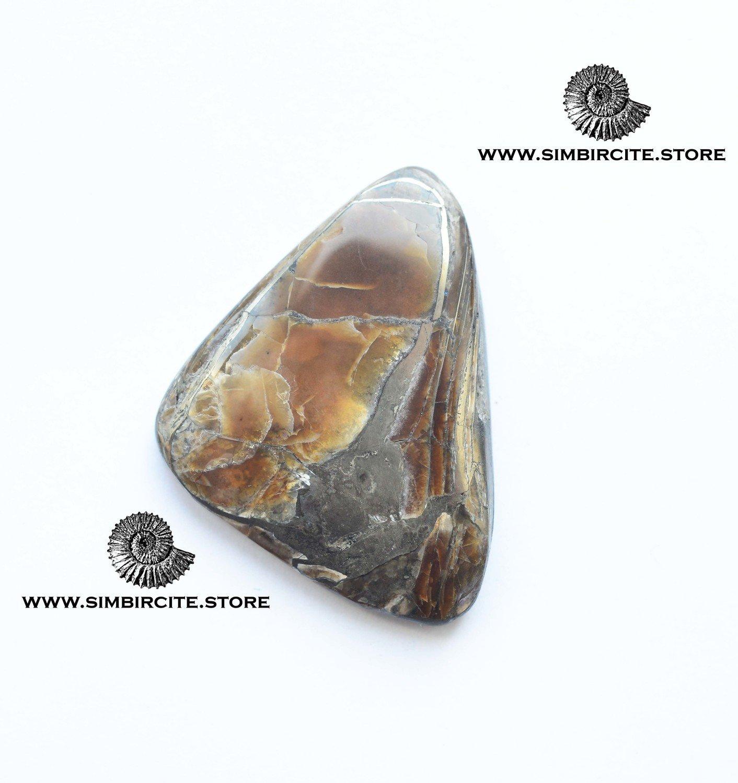 Аммонитовый симбирцит 45*33*5 мм