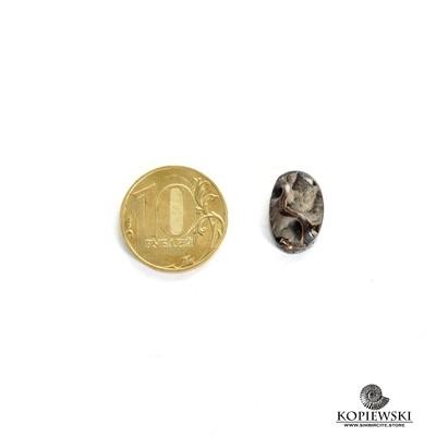 Аммонитовая жеода 16*10*5 мм