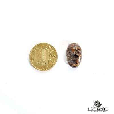 Аммонитовая жеода 20*11*5 мм