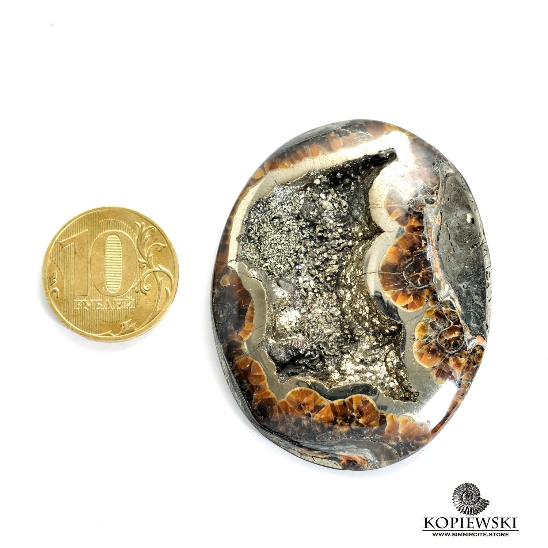 Аммонитовая жеода 55*44*15 мм
