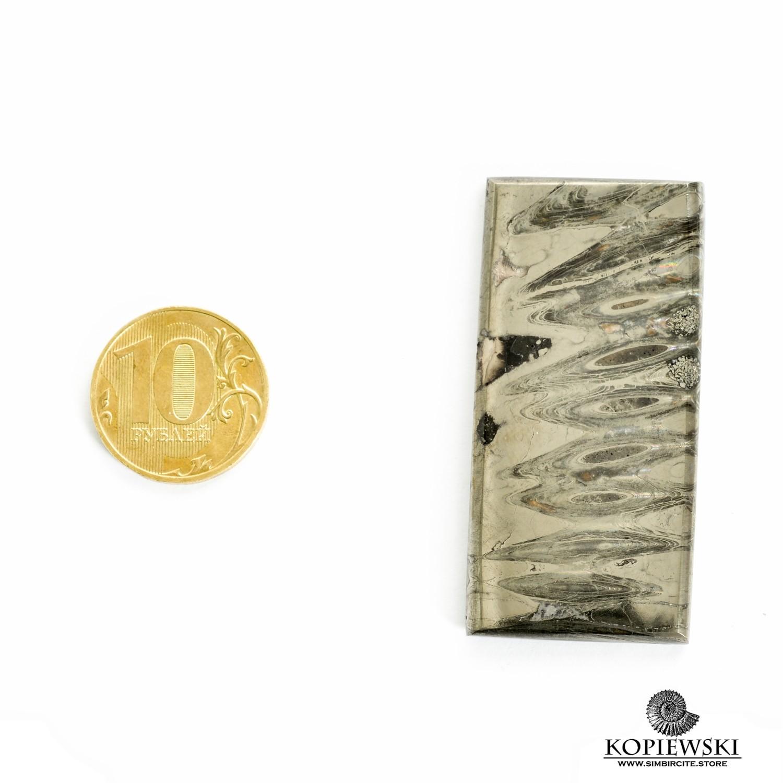 Аммонитовый симбирцит 57*25*3 мм