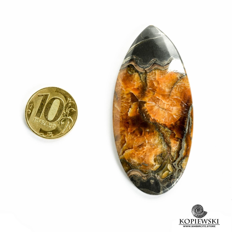 Аммонитовый симбирцит 70*35*3 мм