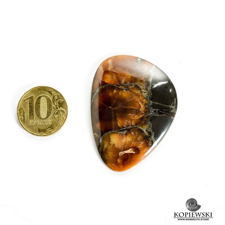 Аммонитовый симбирцит 50*37*3 мм