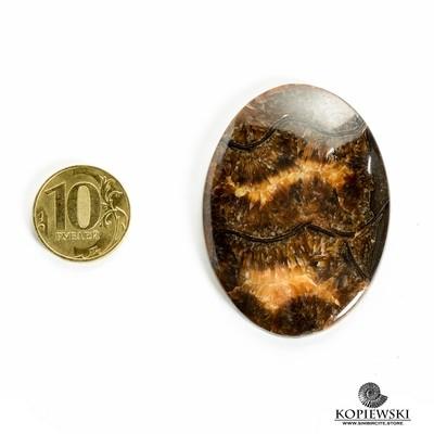Аммонитовый симбирцит 55*40*3 мм