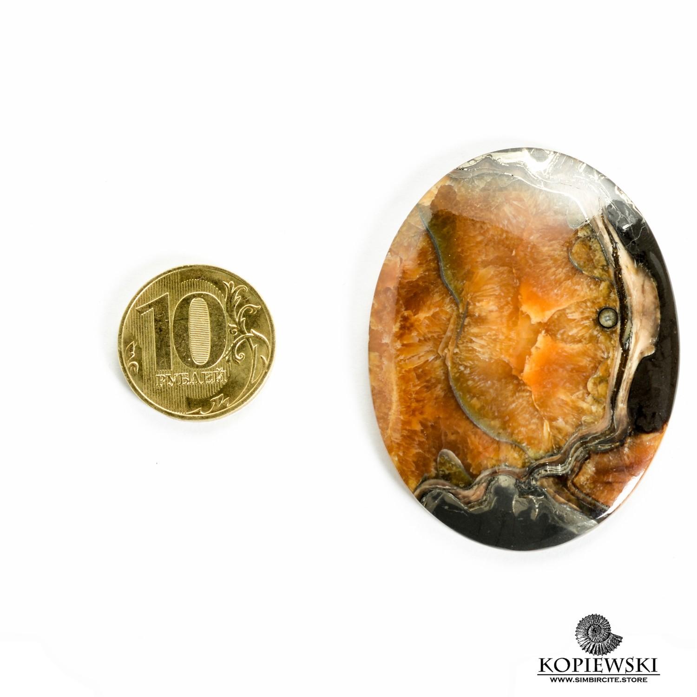 Аммонитовый симбирцит 55*45*3 мм