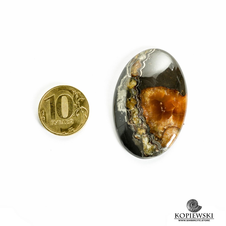 Аммонитовый симбирцит 47*30*3 мм