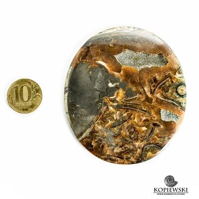 Аммонитовый симбирцит 85*75*3 мм