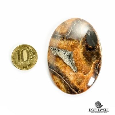 Аммонитовый симбирцит 65*45*3 мм
