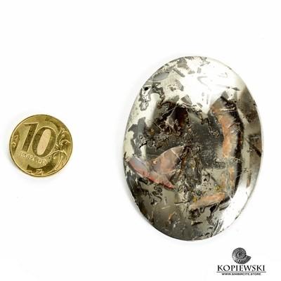 Аммонитовый симбирцит 65*47*3 мм