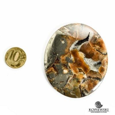 Аммонитовый симбирцит 70*60*3 мм