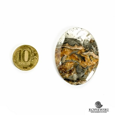 Аммонитовый симбирцит 50*35*3 мм