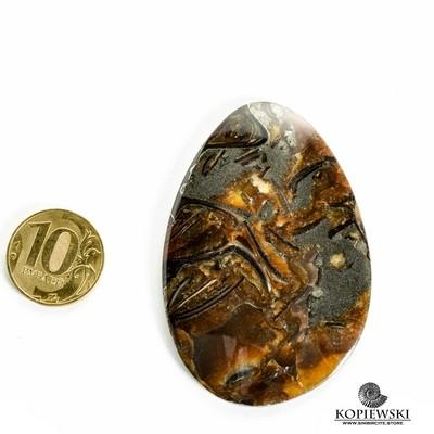 Аммонитовый симбирцит 65*40*3 мм