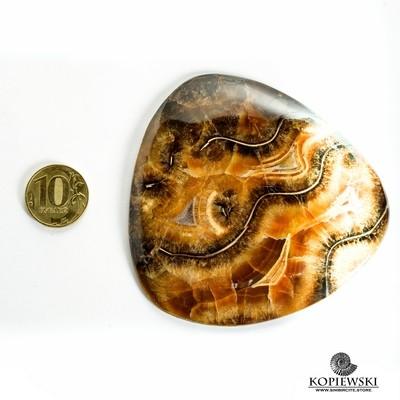 Аммонитовый симбирцит 90*85*4 мм