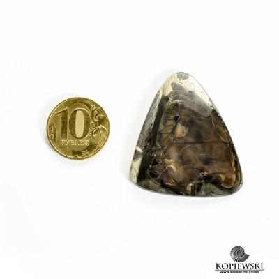 Аммонитовый симбирцит 40*35*3 мм