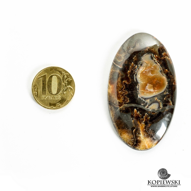 Аммонитовый симбирцит 55*30*3 мм