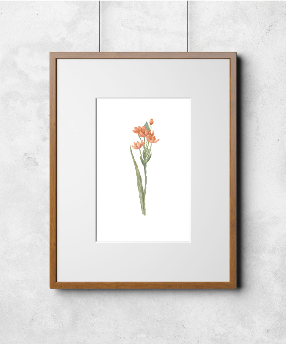 Fleur No.2 00004