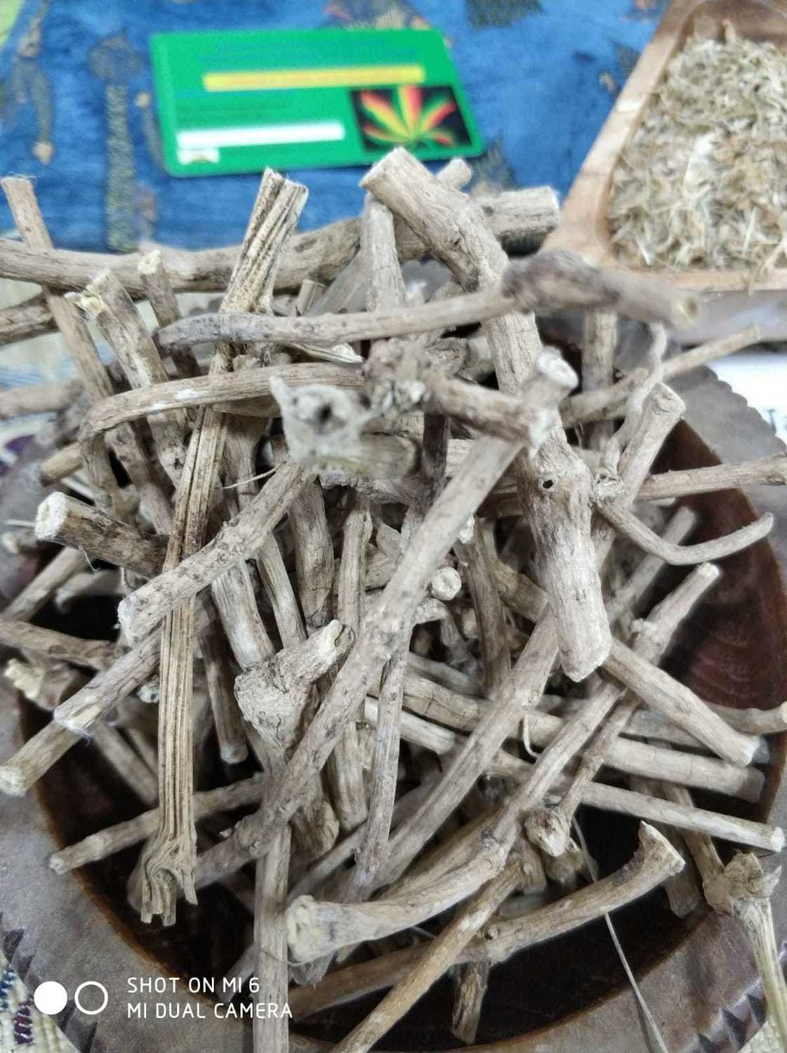 Silene Capensis - African Dream root