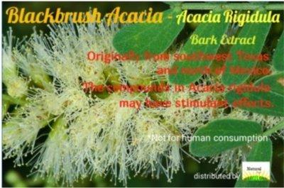 Acacia Rigidula Bark Extract in Capsules - Vachellia Rigidula - Blackbrush Acacia