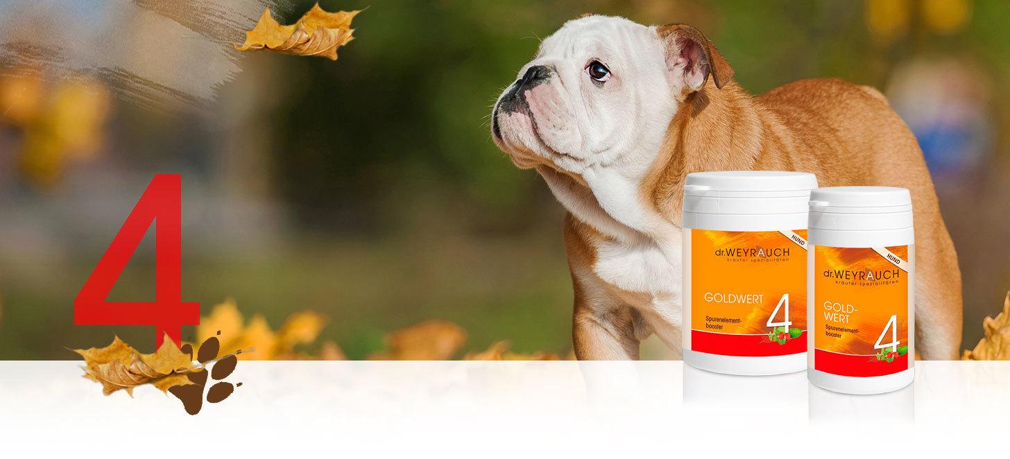 Dr.Weyrauch Goldwert Nr. 4 Hund 00179