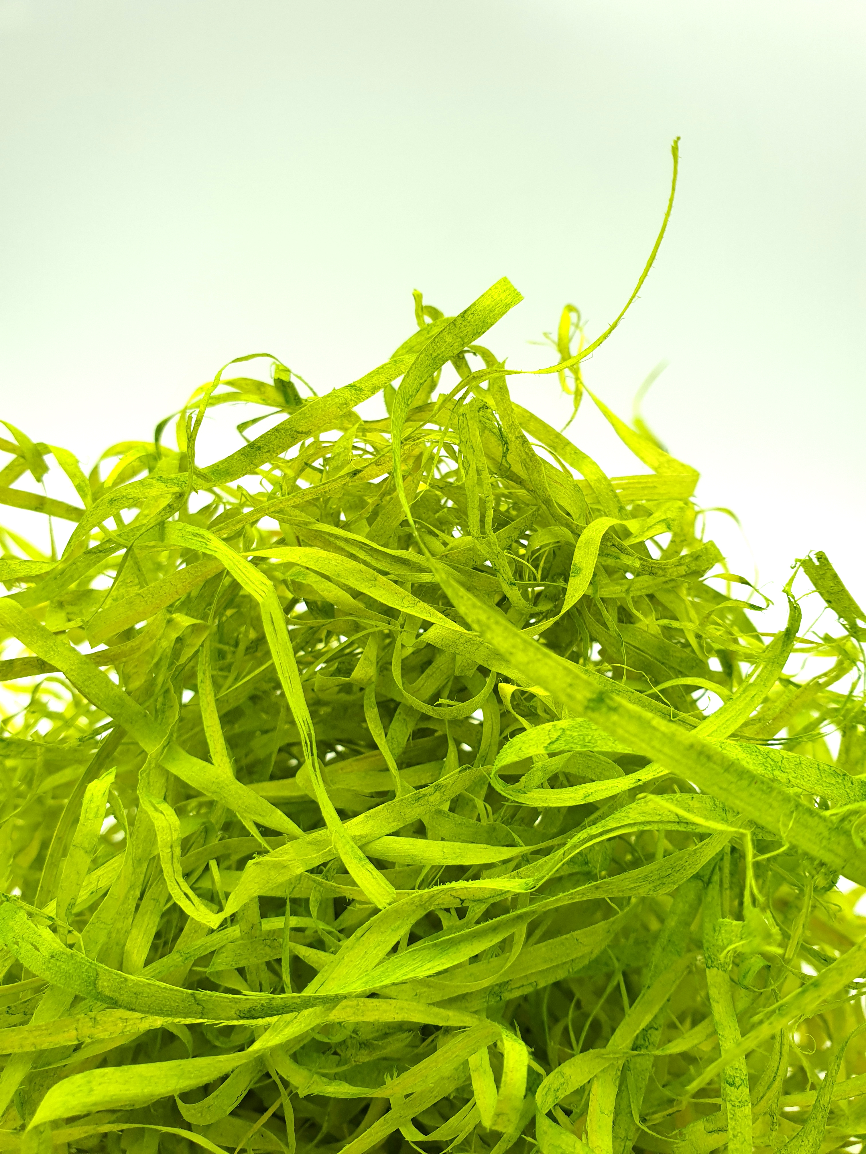 Wood Wool 100g Fine - Lime Green WWLG