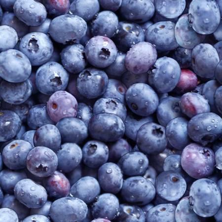 Blue Blueberries - Elizabeth Studio PDXF2LC5