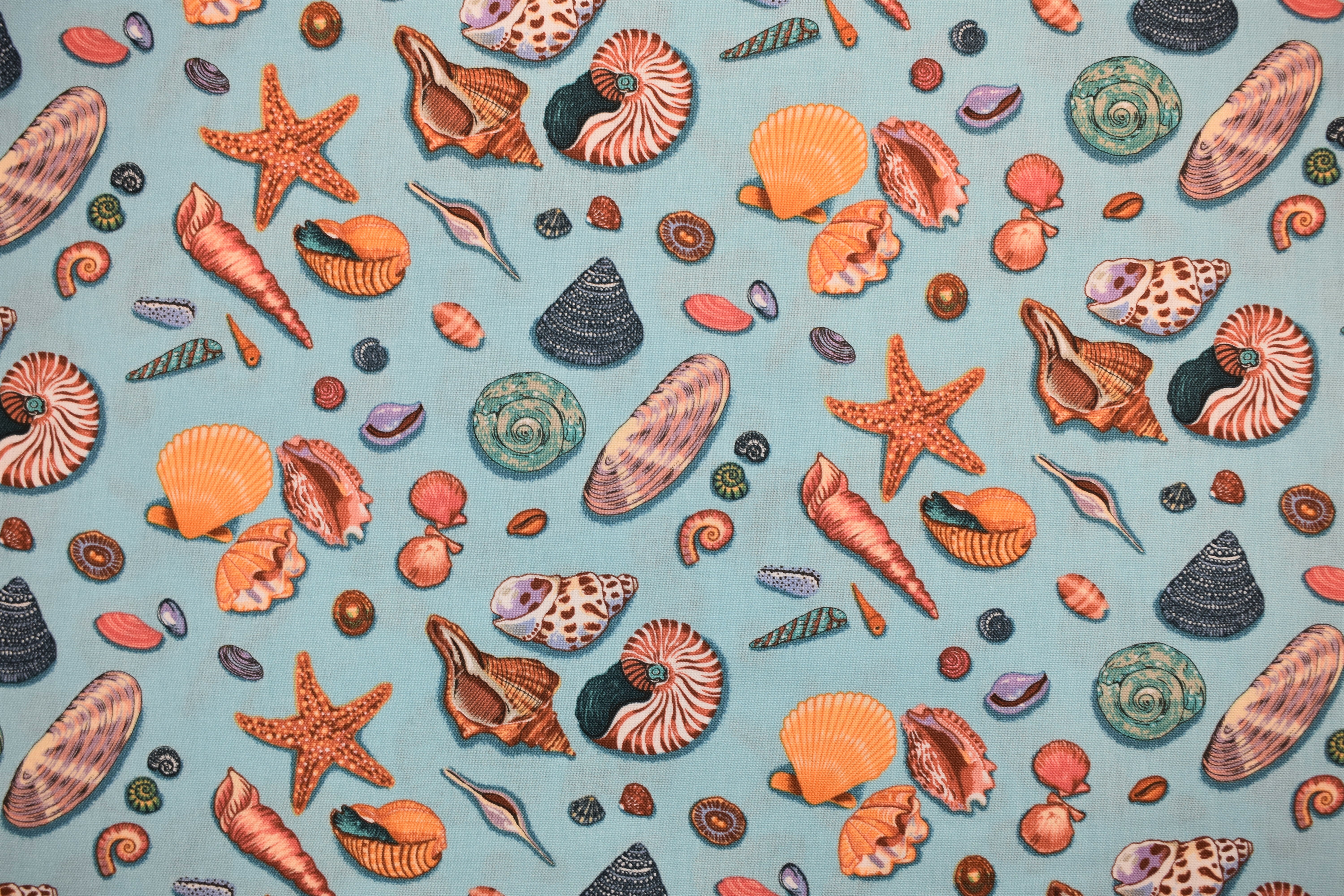 By the Sea - Shells - Nutex 54988