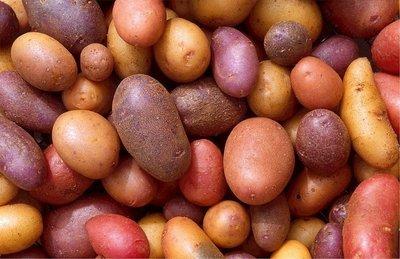 Maine Potato (Multi Farm Sourced)