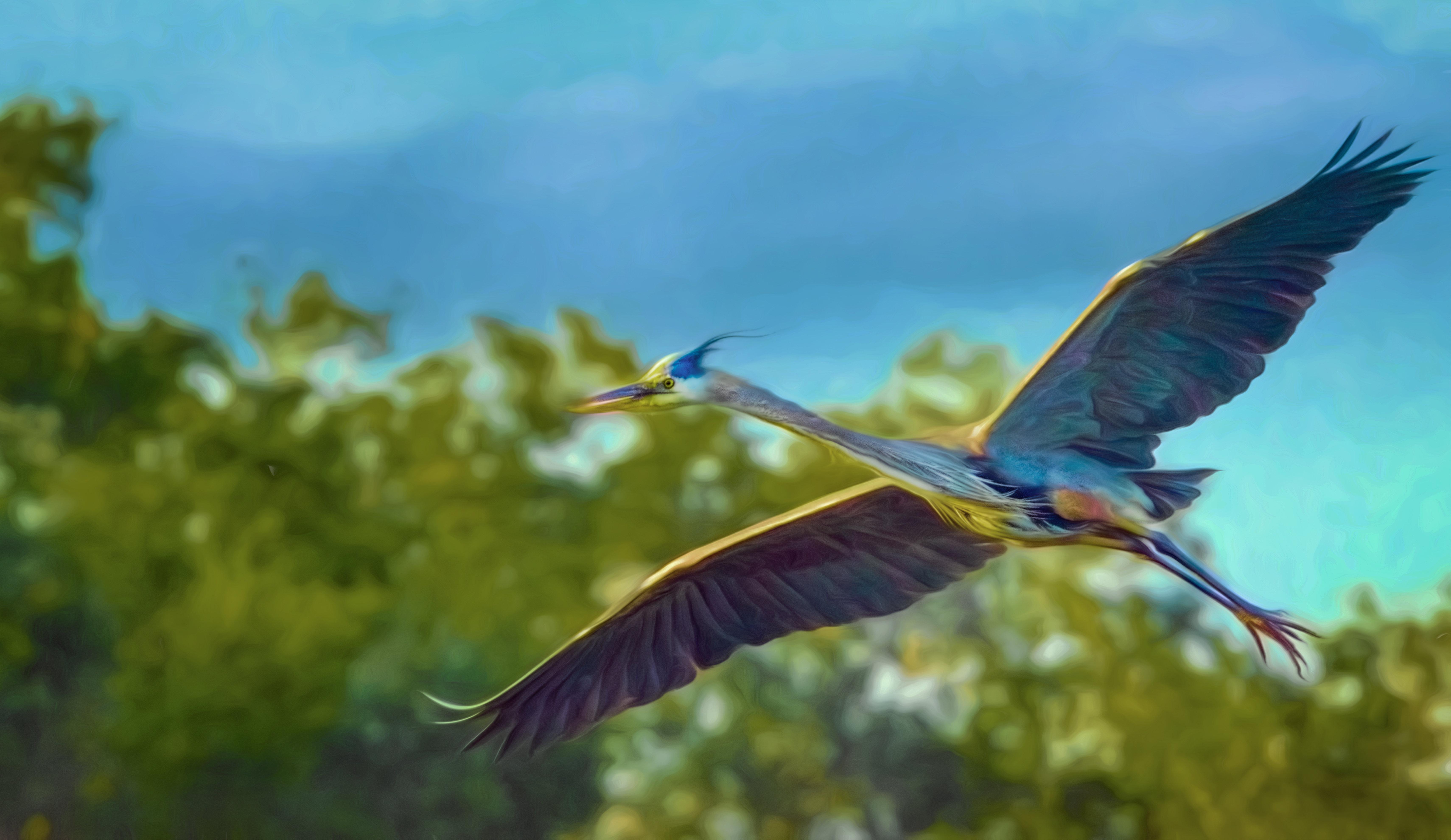 Flying Dino 001-109