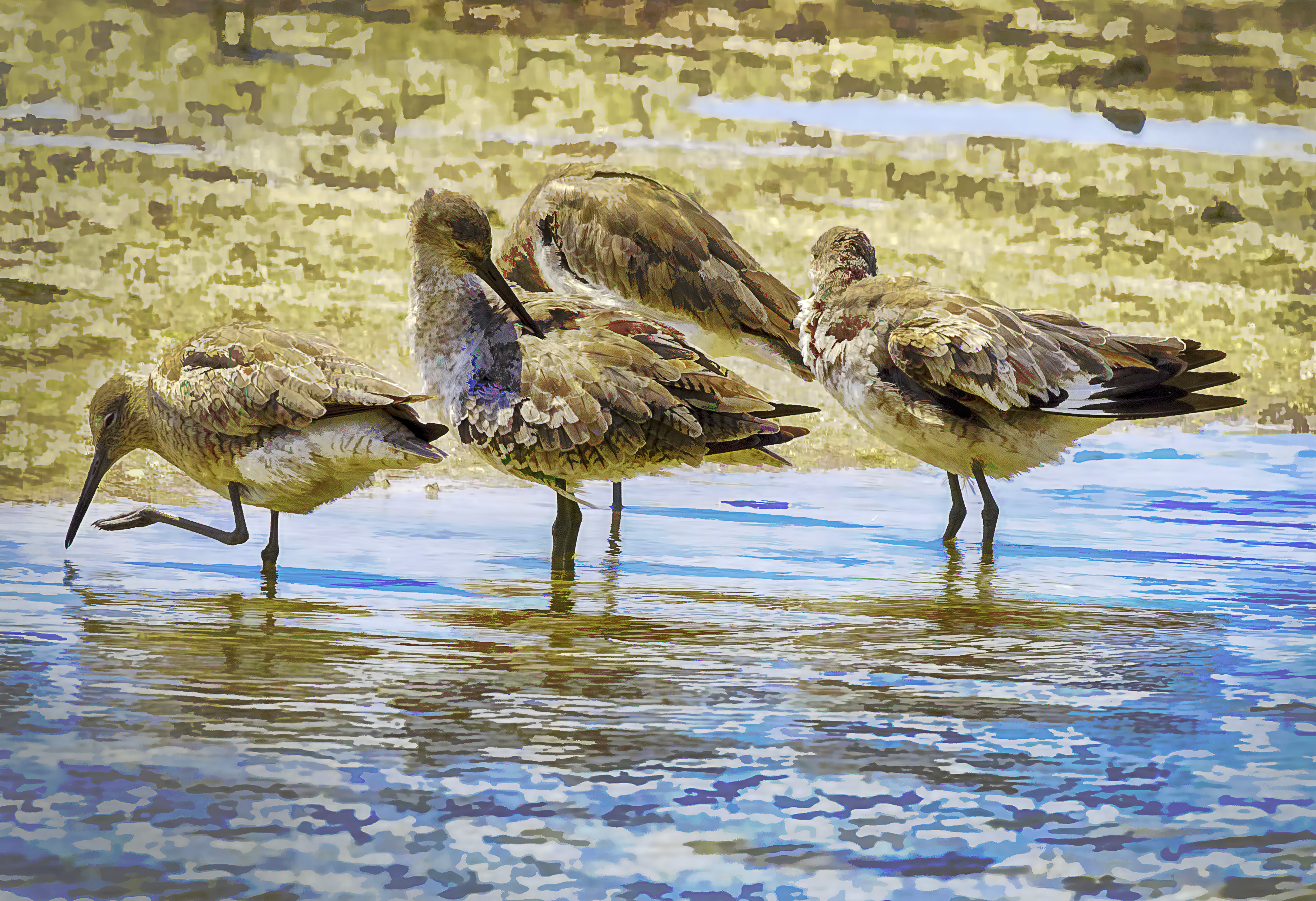 Sandpipers 001-110