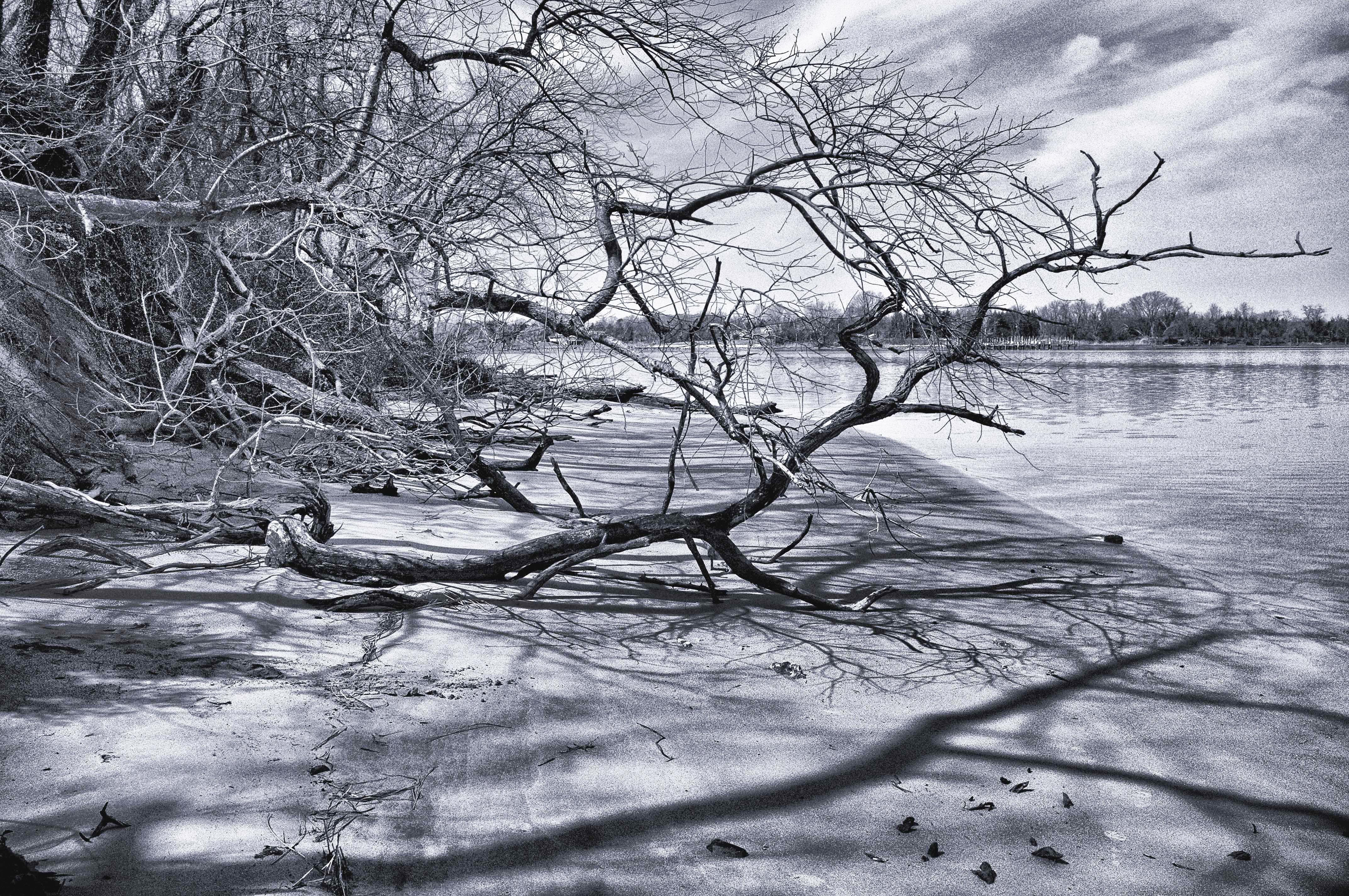 Wye River Md. 004-114
