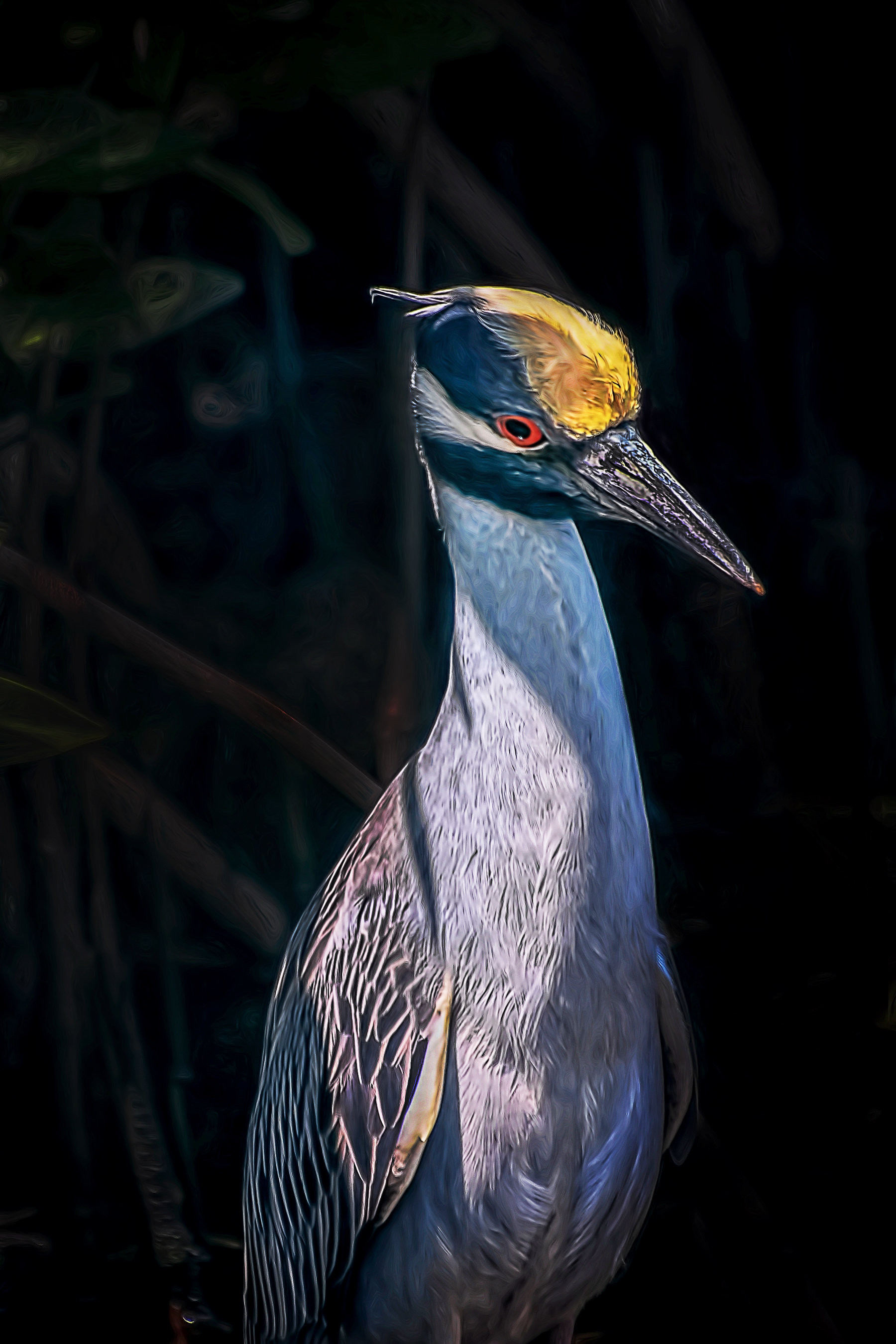 Yellow Crested Night Heron 001-111