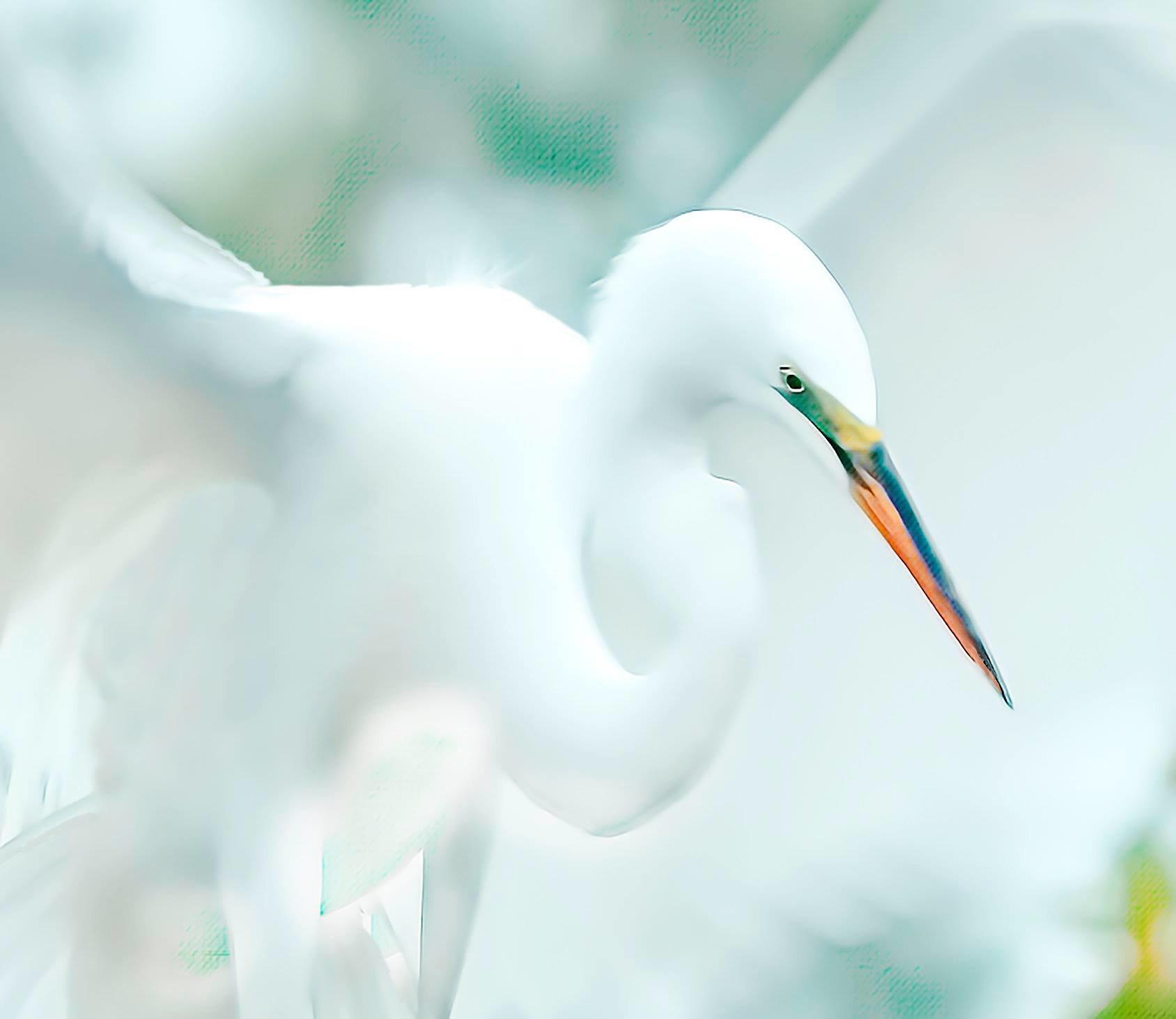 White on White 001-118