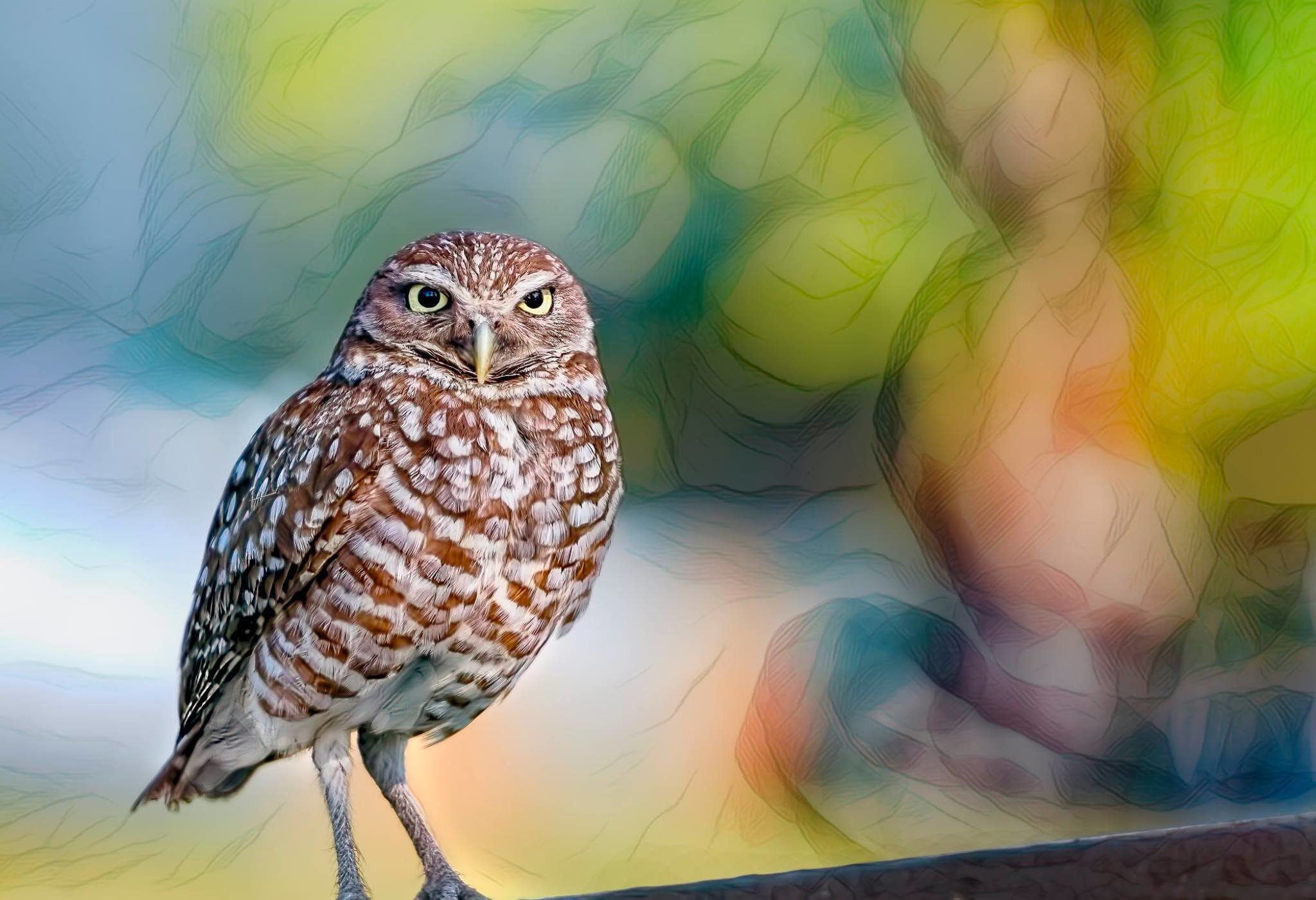 A Very Small Ground Burrowing Owl 001-122