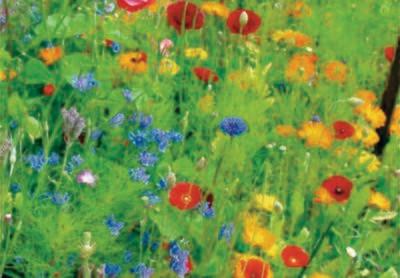 Vildtager - Blomsterblandning 10 gr.
