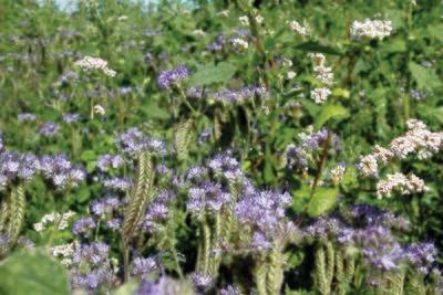 Vildtager - Pollen og Nektarblandning 1 kg.